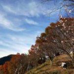 桜山公園の冬桜と紅葉。 -PHOTO MOVIE