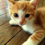 小猫ちゃんと戯れ。
