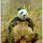 行き先は伝えずに・・・。 -家族旅行 at 上野動物園