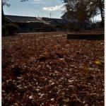 落ち葉の絨毯。