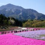 色とりどりに輝く春のキャンバスを眺め。 -羊山公園 芝桜の丘