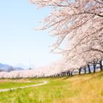 数年来、恋い焦がれた春の景色。 -こだま千本桜 2018