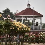 敷島公園ばら園で薔薇のお花見。 -2018・春
