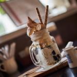 新木珈琲店のアフォガードパフェとソフトたまごサンドモーニング。