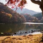 晩秋の碓氷湖(坂本ダム)、紅葉のコントラスト。