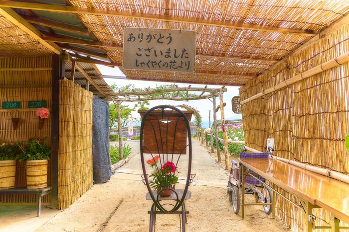 富岡しゃくやく園 -群馬県富岡市