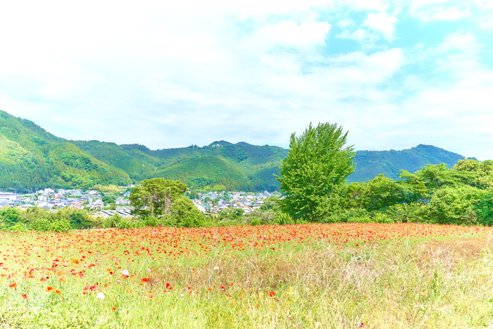 八塩ポピー園 -群馬県藤岡市