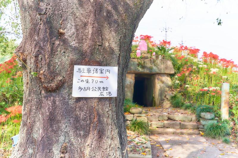 多胡薬師塚古墳 彼岸花 -群馬県高崎市吉井町