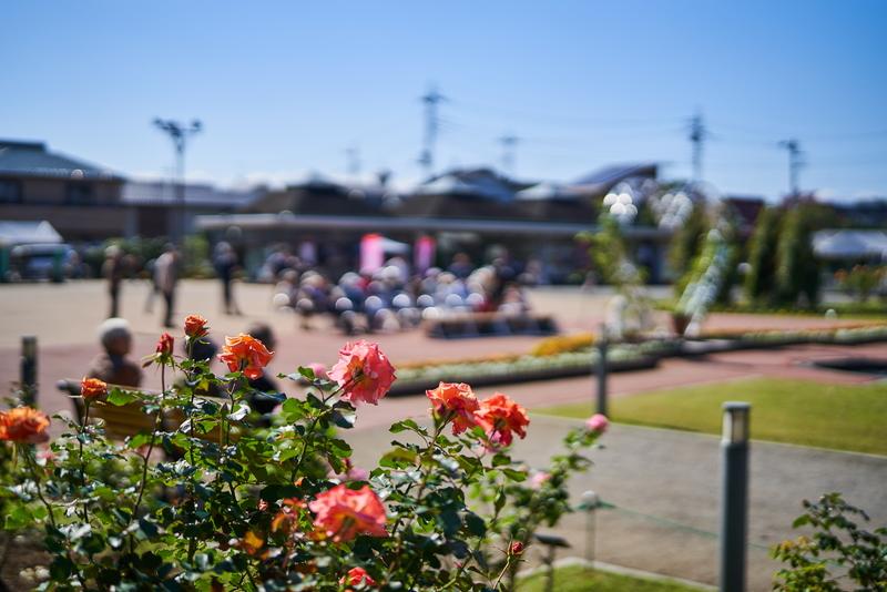 敷島公園ばら園 秋のバラフェスタ -2019