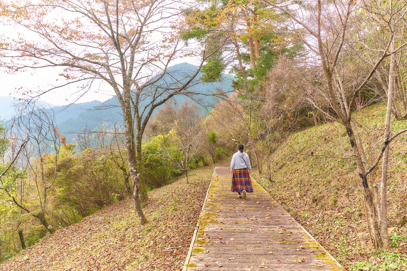 城峯公園 冬桜と紅葉 -埼玉県児玉郡神川町