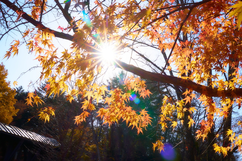紅葉の雲場池 -長野県北佐久郡軽井沢町