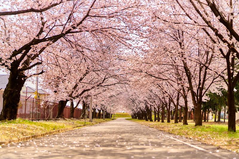 群馬の桜スポット