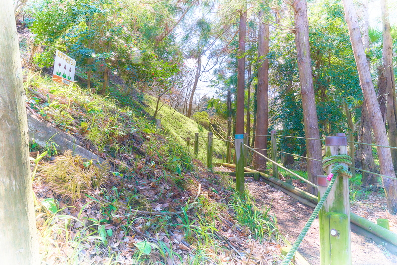 小串カタクリの里 -群馬県高崎市