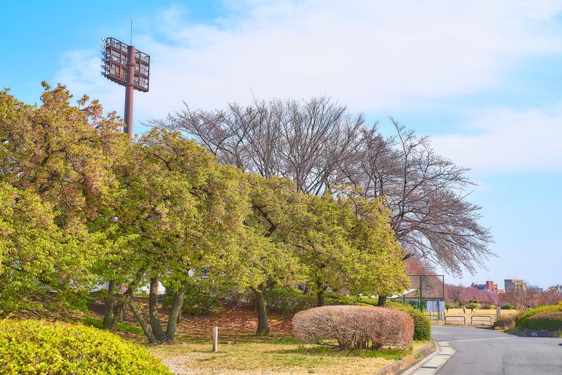 敷島公園 -群馬県前橋市