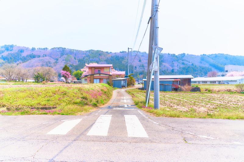 天照寺の枝垂れ桜 -群馬県沼田市