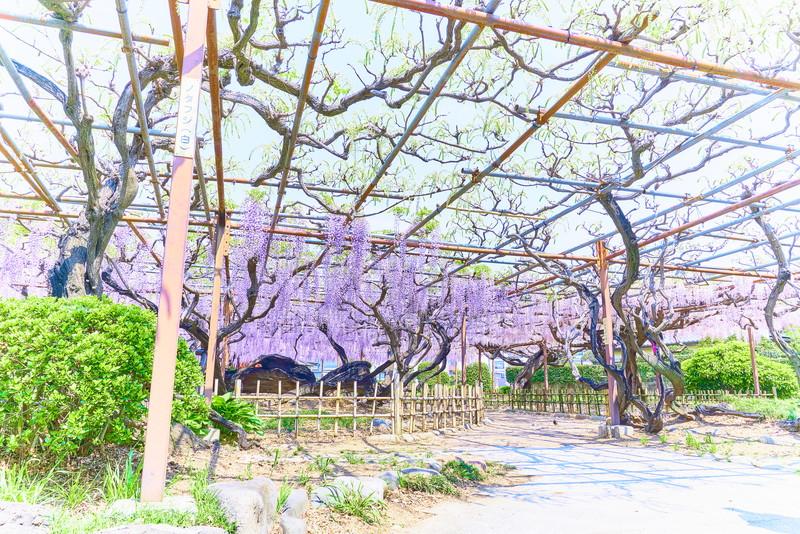須賀の園 -群馬県前橋市