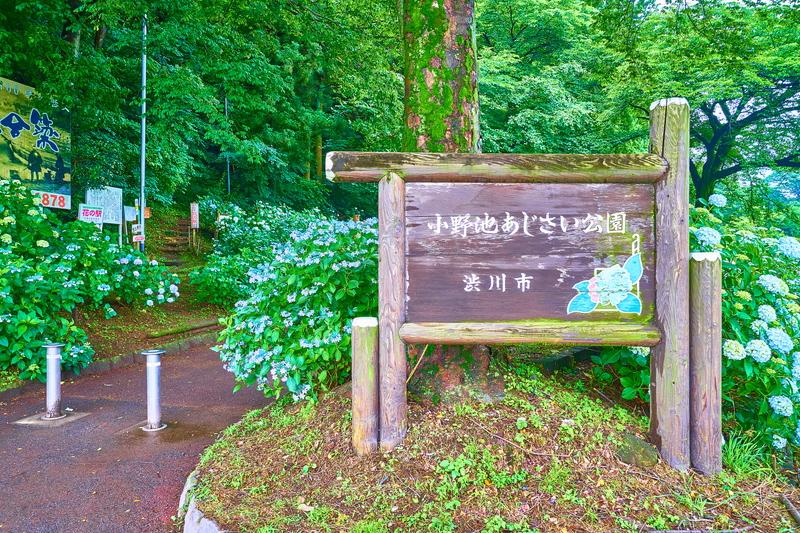 小野池あじさい公園 -群馬県渋川市