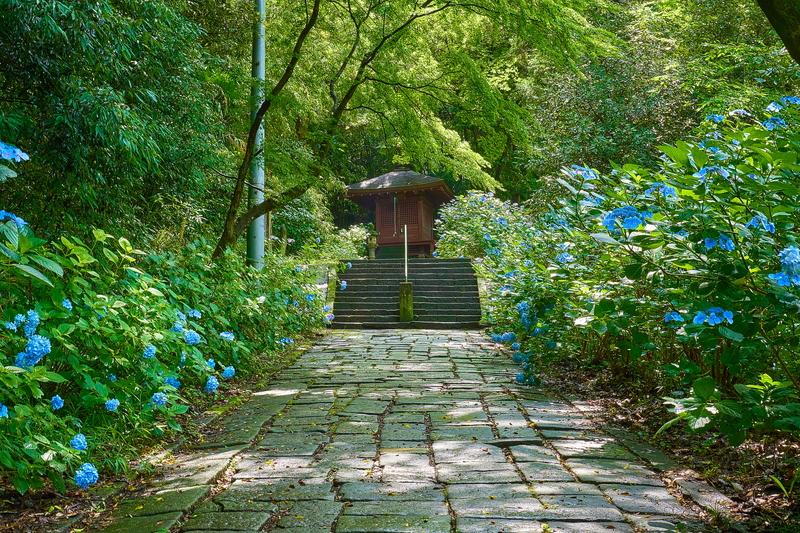 清水寺(あじさい寺) -群馬県高崎市