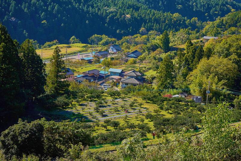 桜山観光 みかん狩り|群馬県藤岡市