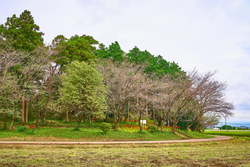 お富士山古墳 彼岸花 -群馬県伊勢崎市