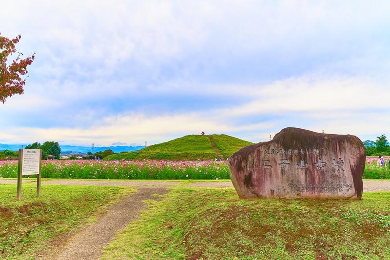二子山古墳 at 上毛野はにわの里公園のコスモス -群馬県高崎市