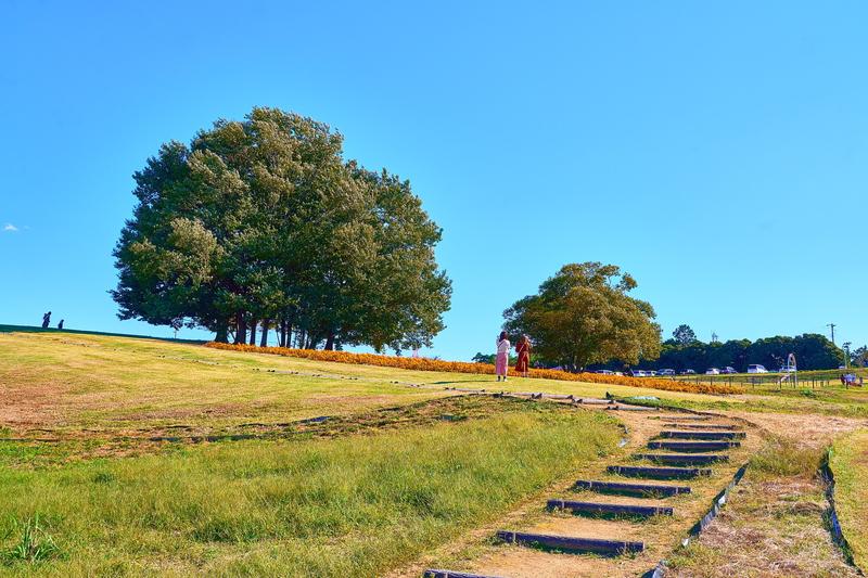 マリーゴールドの丘公園 -埼玉県本庄市