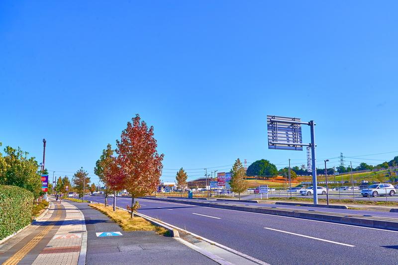 マリーゴールドの丘公園