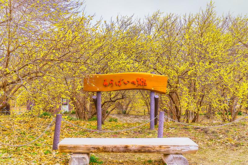 ろうばいの里|群馬県安中市松井田町