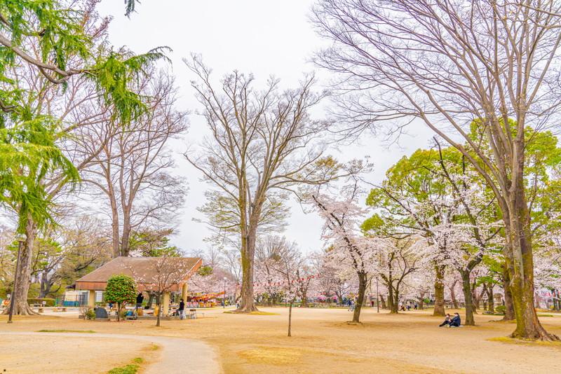 高崎公園|群馬県高崎市