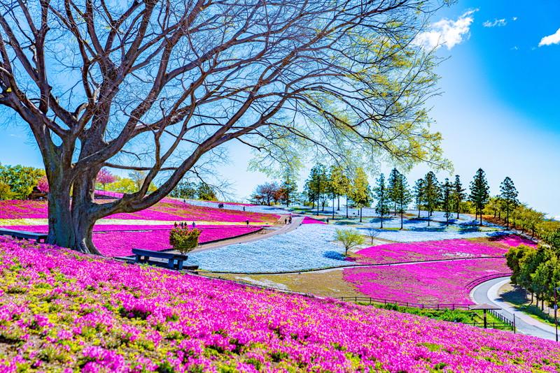 八王子山公園(太田市北部運動公園)|群馬県太田市