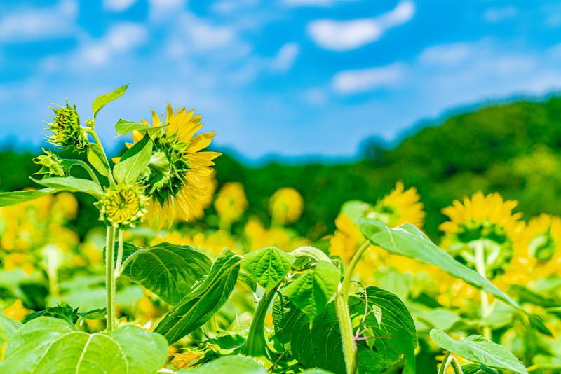 鼻高展望花の丘|群馬県高崎市