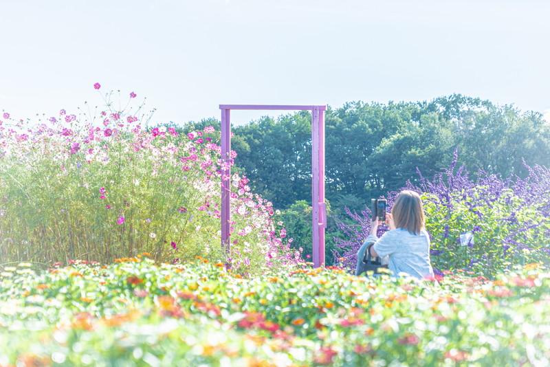 鼻高展望花の丘 群馬県高崎市